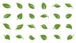 leafs green