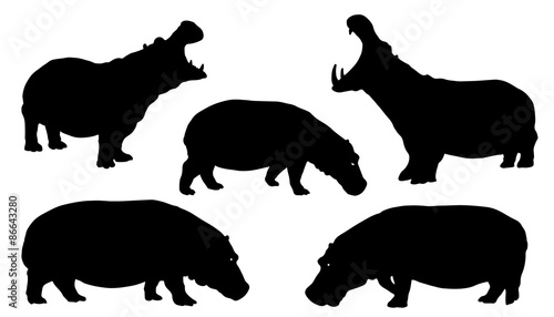Valokuva hippo silhouettes
