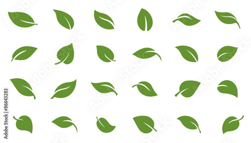 Photo leafs green