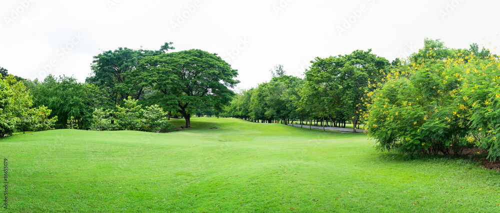 Fototapety, obrazy: green grass field in big city park panoram