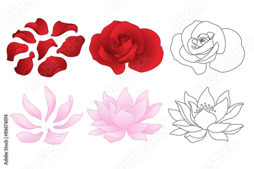 Vector Rose And Lotus Flowers And Petals Buy This Stock Vector