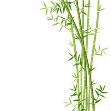 Green Bamboo On White Background, Vector Illustration