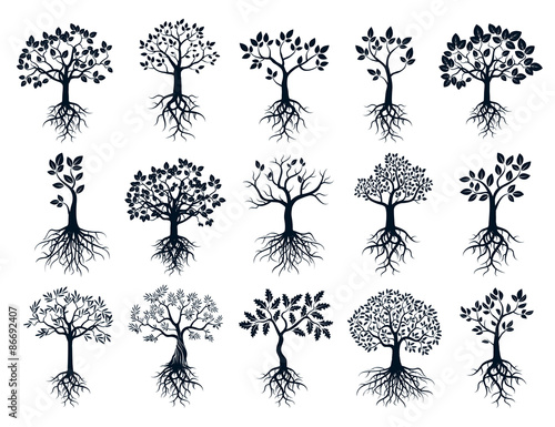 Obraz na płótnie Set of Black Trees and Roots