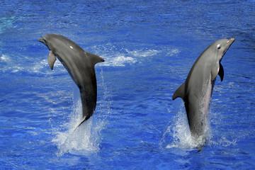 Fototapeta Wieloczęściowe dolphins underwater and breaking splashing wave above them