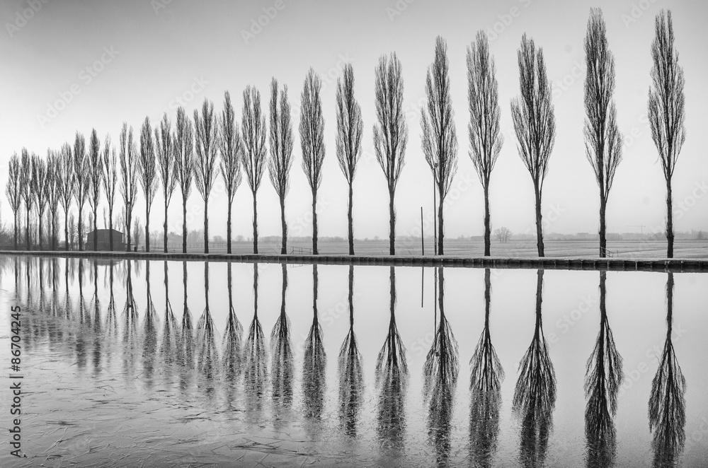 Fototapeta Alberi riflessi sul lago all'alba in bianco e nero