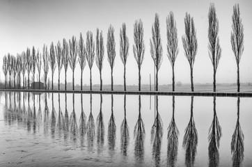Fototapeta Minimalistyczny Alberi riflessi sul lago all'alba in bianco e nero