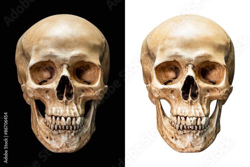 Human skull isolated Canvas Print