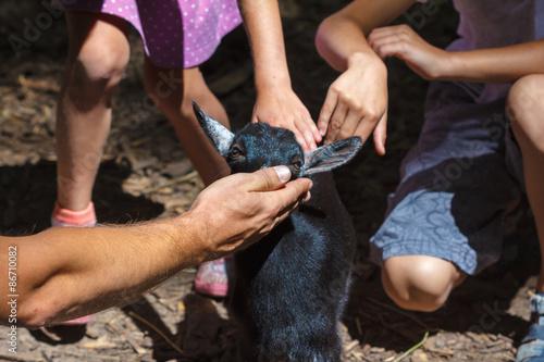 Fotografía  Small gentle goat