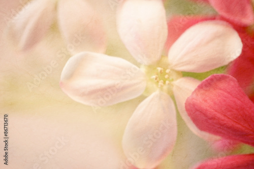 Spoed Foto op Canvas Frangipani sweet color flowers in soft style on mulberry paper texture for background