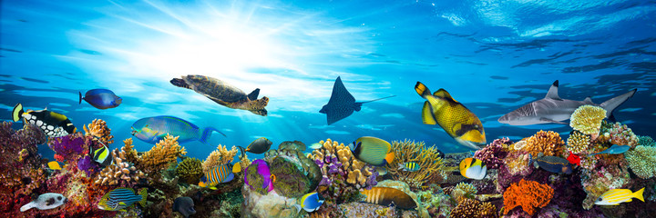 Panel Szklanyunderwater sea life coral reef panorama with many fishes and marine animals