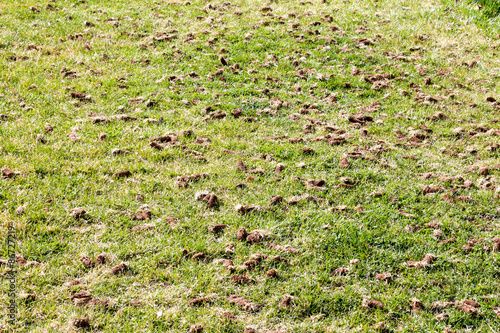 Fényképezés  Full frame image of grass in a park that has been aerated