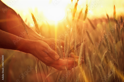 Solar wheat
