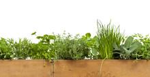Decorative Herbs Border