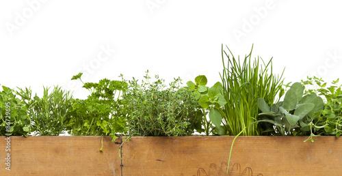 Obraz Decorative Herbs Border - fototapety do salonu