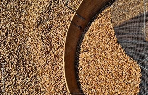 Fototapeta Chicchi di grano con setaccio