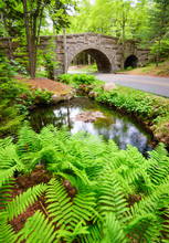 Bridge And Pond At Acadia National Park