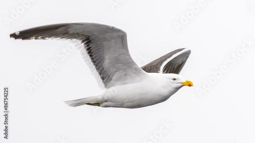 Fotografia, Obraz  Birds of SouthPole