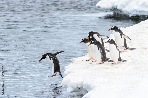 Photo Stands Antarctic Fauna of Antarctica