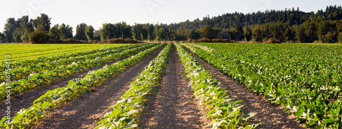Planted Rows Herb Farm Agricultural Field Plant Crop Fotobehang