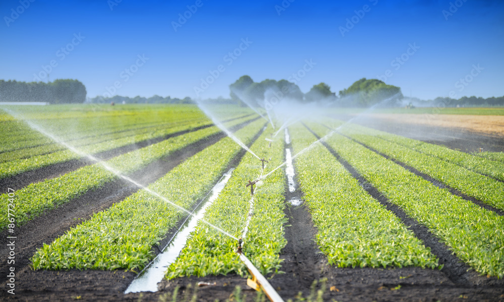 Fototapety, obrazy: watering crops