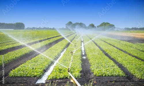 Fotografia  watering crops