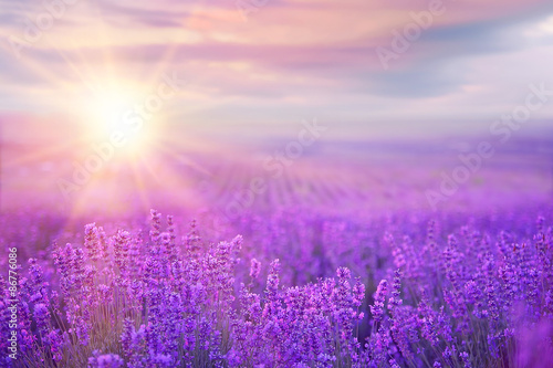 Sunset over a lavender field. Wallpaper Mural