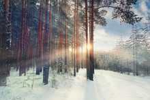 January Winter Landscape In The Forest