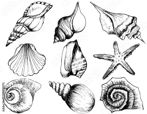 Carta da parati Hand drawn collection of various seashell illustrations isolated on white backgr