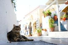 明るい旧市街でたそがれる猫