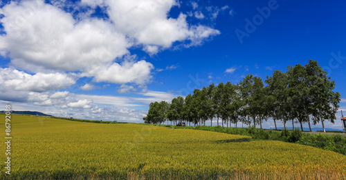 Papiers peints Jardin agriculture at remote area, Hokkaido
