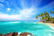 Beach side Sri Lanka with coconut trees