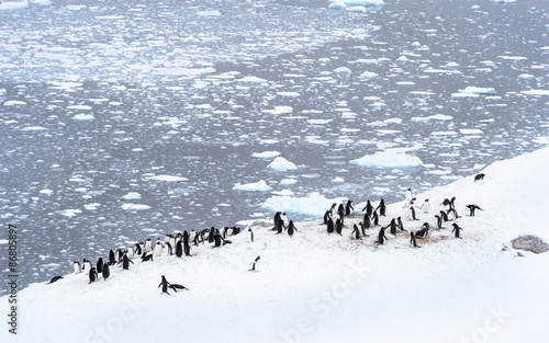 Penguins parade in Antarctica