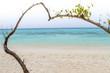 Heart-shaped tree on a beach overlooking the sea at koh rok, la
