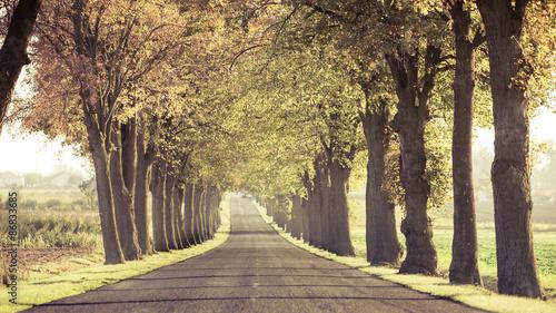 obraz lub plakat Droga biegnie przez drzewa alei.