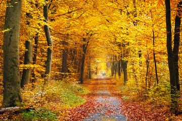 FototapetaAutumn forest