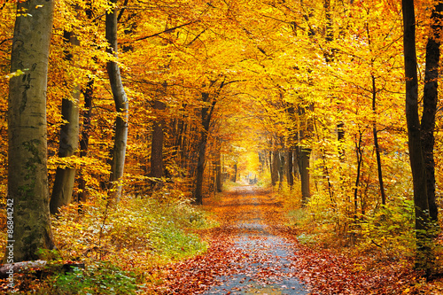 Aluminium Prints Road in forest Autumn forest