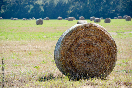 Fotografie, Obraz  Round hay Bale to right of frame