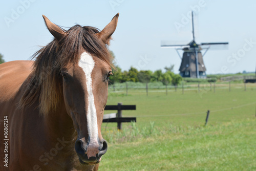 Canvas Prints Horses Horse and nice mill in the Netherlands