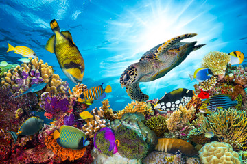 Panel Szklany Rafa koralowa underwater sea life coral reef panorama with many fishes and marine animals