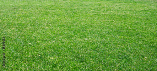 Papiers peints Herbe Green grass