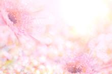 Soft Sweet Pink Flower Backgro...