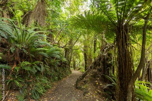 rodzimych-krzewow-nowej-zelandii
