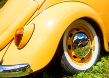 Orange Beetle In A Sunny Day