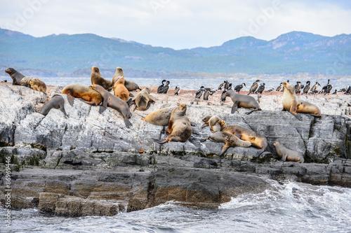 Papiers peints Arctique Group of the sea lions on the rock, Beagle Channel