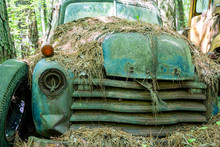 Ford Truck Covered In Straw