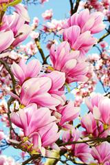 Panel Szklany Podświetlane Kwiaty Magnolia.