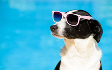 Funny Dog With Sunglasses On S...