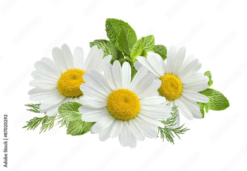 Fototapety, obrazy: Chamomile flower mint leaves composition isolated on white