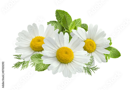 Marguerites Chamomile flower mint leaves composition isolated on white