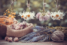 Healing Herbs Bunches And Hess...